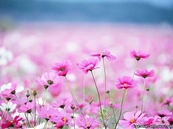 В поле растут цветы