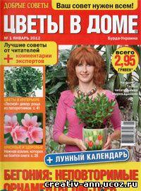 цветы в доме,азалия,декор