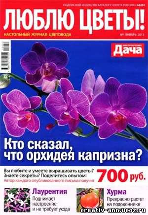 цветы орхидея азалия
